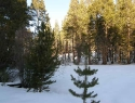 lots for sale in South Lake Tahoe
